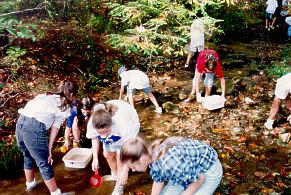 Children collecting samples from one of Camp Dixie's creeks